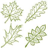 Leaves of plants, pictogram, set poster