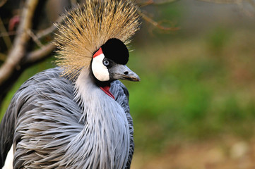 cartoon crowned crane
