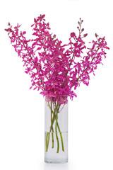 purple orchid in vase