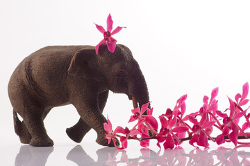 elephant with orchid