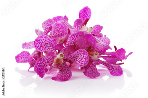 purple orchid pile