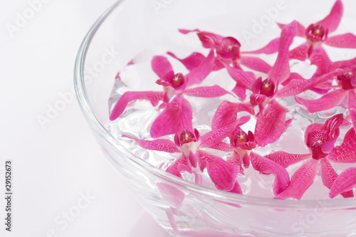 closeup red orchid floating