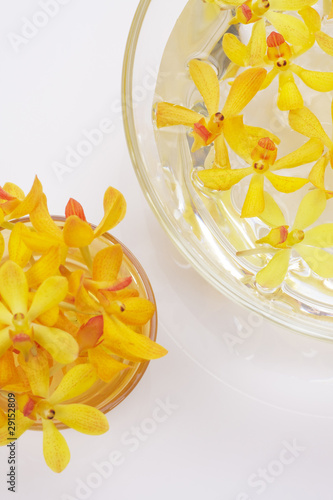 yellow orchid heads