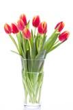 Fototapety Fresh tulips