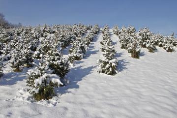 Winter_Schnee_Landschaft