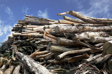 Holzstapel 2