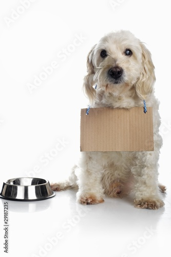 Dog wearing cardboard sign around neck waiting for food
