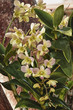 Orchid bloom on  a tropical tree brach