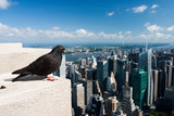 Pigeon on the Empire State Building poster