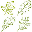 Leaves of plants, pictogram, set
