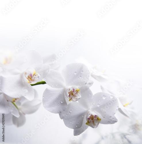 biala-orchidea-na-wodzie