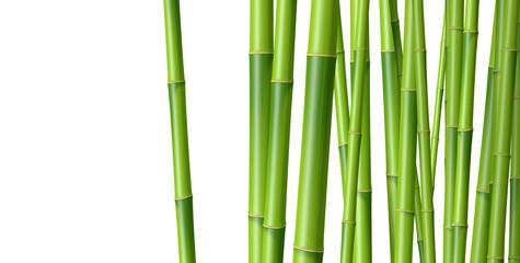 Bambous sur fond blanc 1