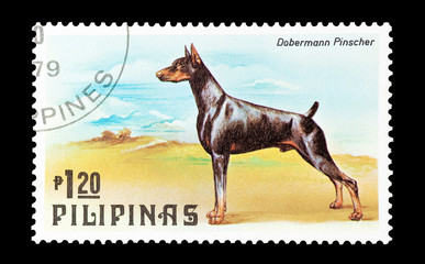 Philippines stamp featuring a Doberman Pinscher dog