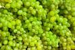 grape bachground