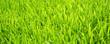Soccer Grass - Fußball Rasen Textur quer