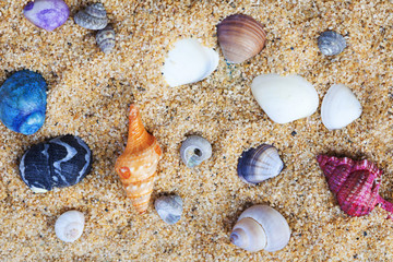 Background of Colorful Sea Shells Embedded in Sand