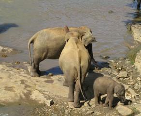 Дикая природа. Слоны.