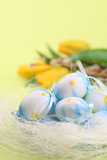 Blue Easter eggs and tulips