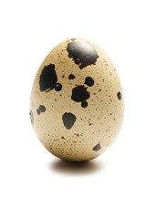 quail egg on white background