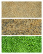 dry and green grass