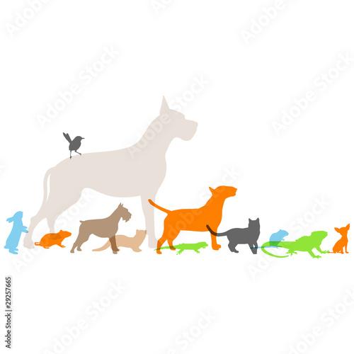 nouveaux animaux de compagnie