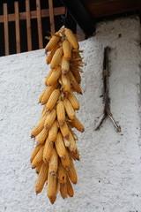 treccia di mais in essicazione