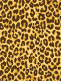 leopard fur seamless vector pattern