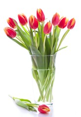 Fresh pink tulips in a vase
