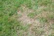 Leinwandbild Motiv Unhealthy grass