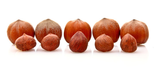 Big and small Hazelnuts Isolated on White Background