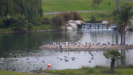 Wildlife area - flamingo and gulls