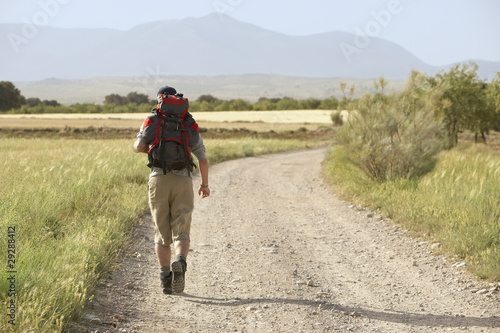 Hiker walking on country road, back view