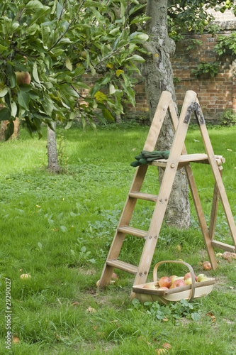 Ladder and Basket of Vegetables