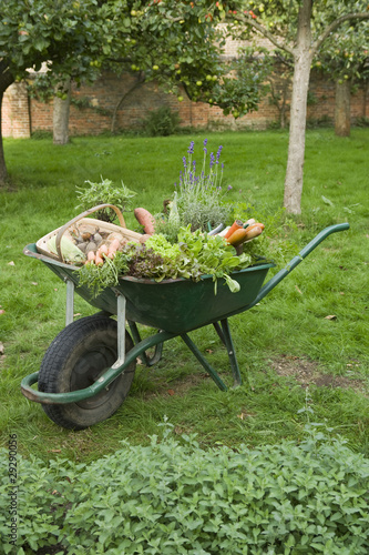 Wheelbarrow Full of Vegetables