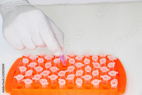 Lab worker adding violet liquid to test tubes in orange tray