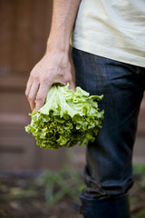 A man holding a lettuce