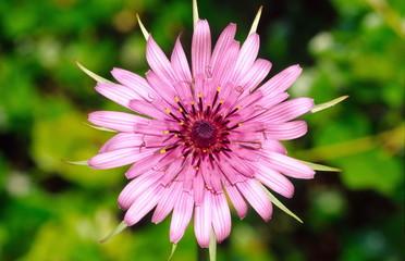 Lavender-colored flower