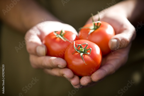 A man holding a handful of tomatoes, close-up