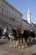 vienna fiakker horses