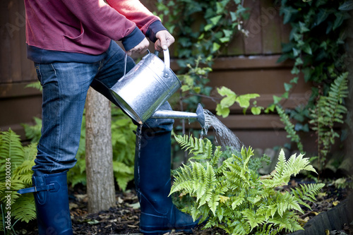 A man watering his garden