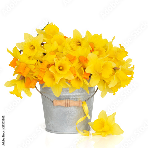 Poster Narcis Spring Beauty