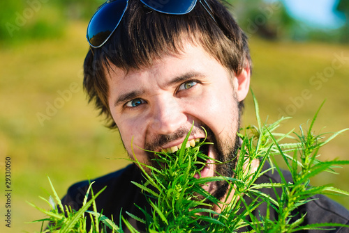 Young man eating leaves of cannabis