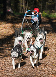 Dog-carting