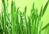 Green wet grass.