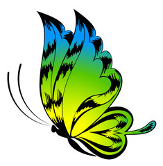 Vector beautiful butterfly