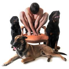 homme et trois chiens