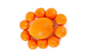 Citruses..