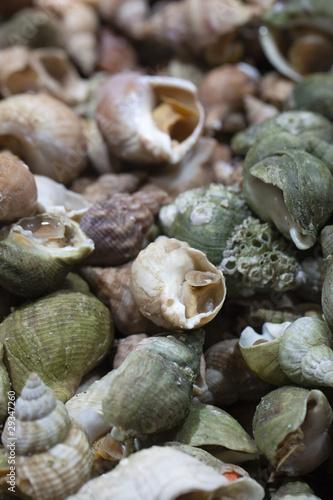 Bulots buccins escargots marins cuisiner de laurent - Cuisiner les escargots ...
