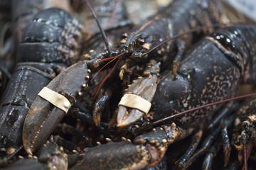 homards vivants de Bretagne au marché