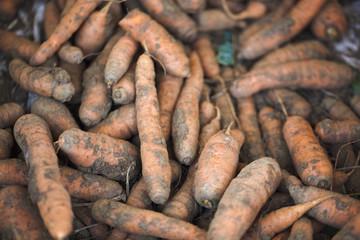 carottes terreuses bio authentiques locales